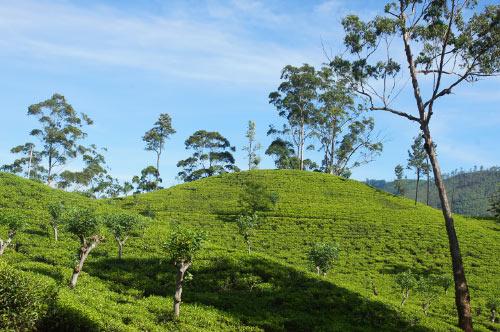 Элла, Шри-Ланка