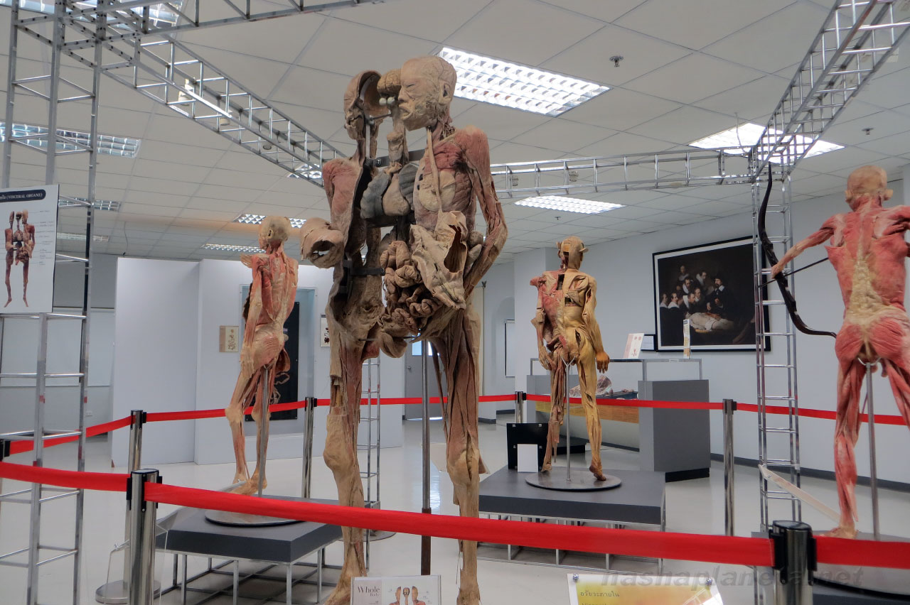 Museum of the human body in Bangkok: description, time, entrance fee how to  get