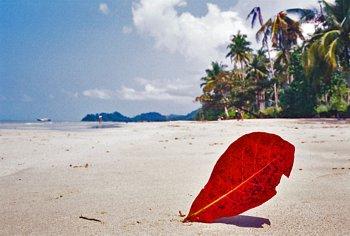 Остров в тайланде ко чанг