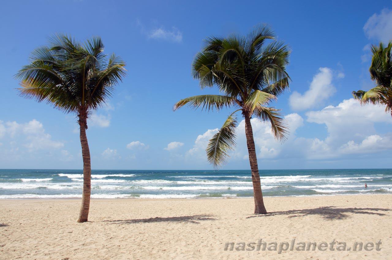 Пляж во Вьетнаме, фото с сайта https://nashaplaneta.net/