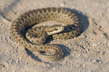 фото змеи крыма