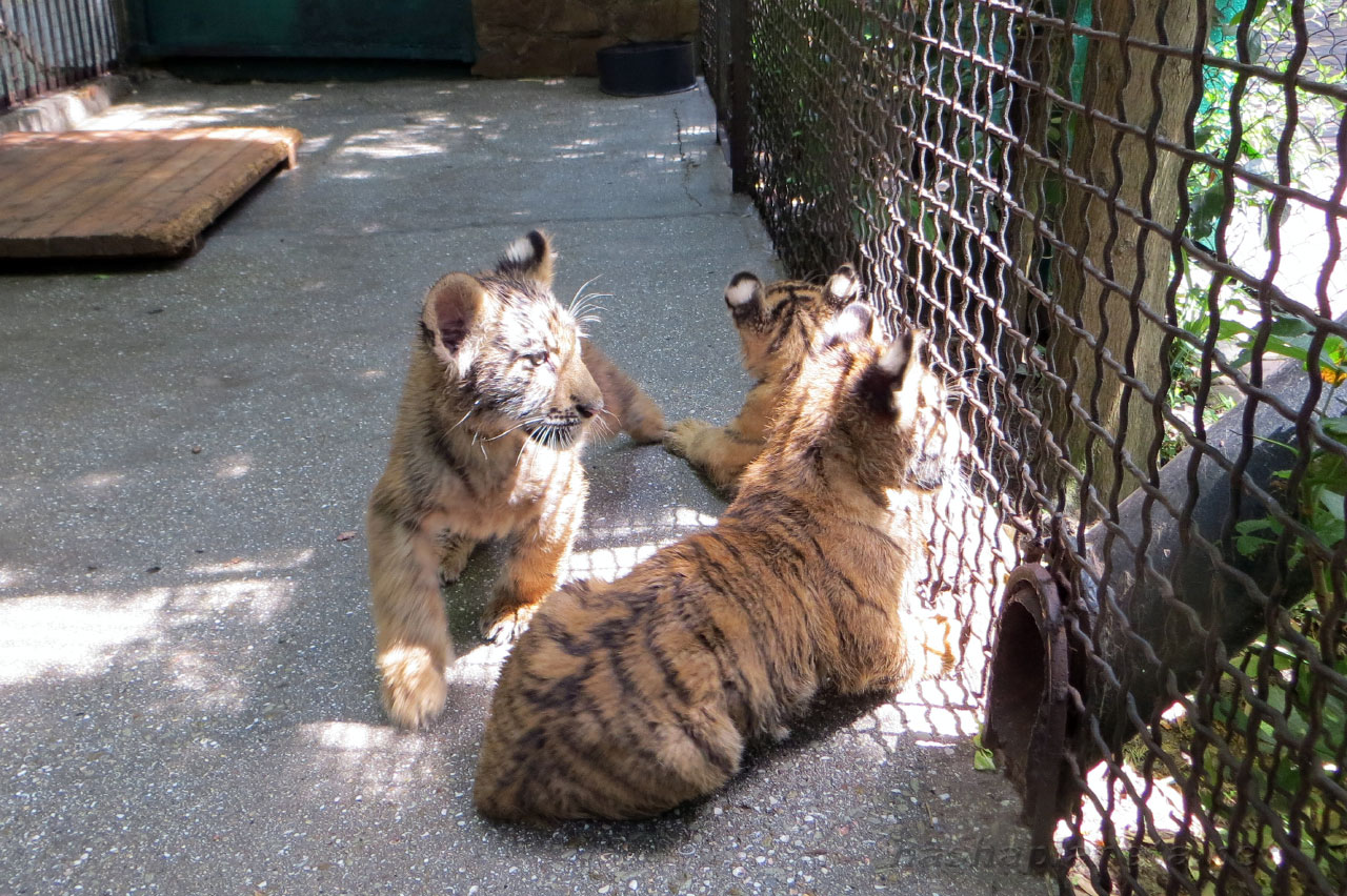 Best Zoo in Anapa